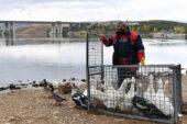 Yırtıcı Kuşlar Özgürlüğe Kanat Çırptı