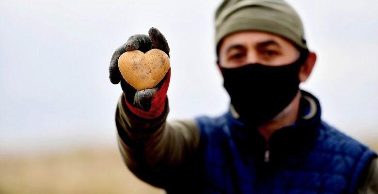 Gölbaşı Karaoğlan'daki atıl arazide patates hasadı başladı