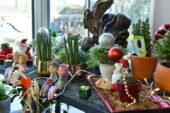 ANFA Bitki Evi'nde Yeni Yıl Çiçekleri Başkentlileri Bekliyor