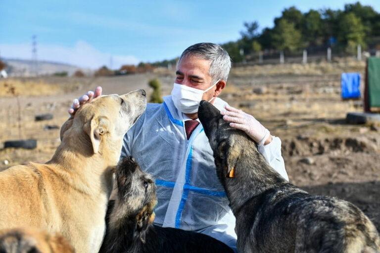 Gönüllü hayvansever barınaklarında kuduz aşısı kampanyası