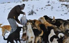 Başkentte ortak akıl sokak hayvanları için de devrede