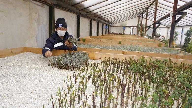 Akyurt Belediyesi çiçeklerini kendisi yetiştiriyor