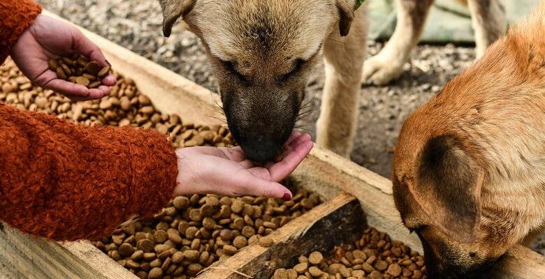 Büyükşehir'in hayvan dostu uygulamaları devam ediyor