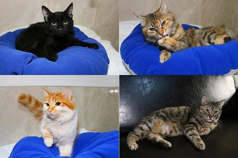 Minik kediler yeni sahiplerini bekliyor