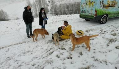 Pursaklar Belediyesi Soğuk Kış Günlerinde Can Dostlarını Yalnız Bırakmıyor