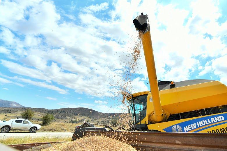 Yüzde 90'ı hibe nohut tohumu desteği başlıyor