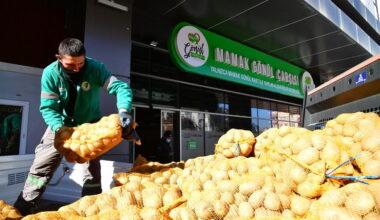 3 bin 8 yüz haneye, 55 ton patates