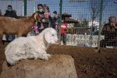 Çocuklar doğal yaşam parkına akın etti