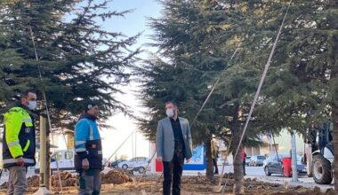 Pursaklar'da Ağaçlar Kesilmiyor Naklediliyor
