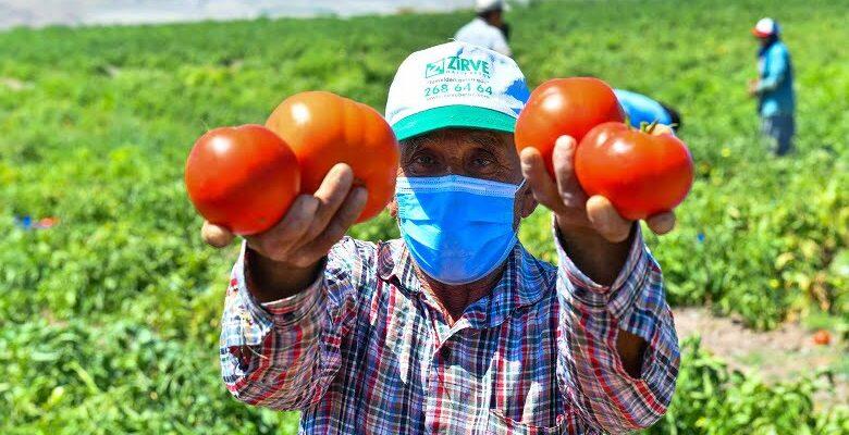 Başkent Çiftçisine Sebze Fidesi Desteği: Talep Başvuruları Başladı