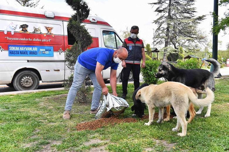 Büyükşehir'den sokak hayvanlarına 100 ton besin desteği
