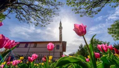 Altındağ'a rengarenk laleler