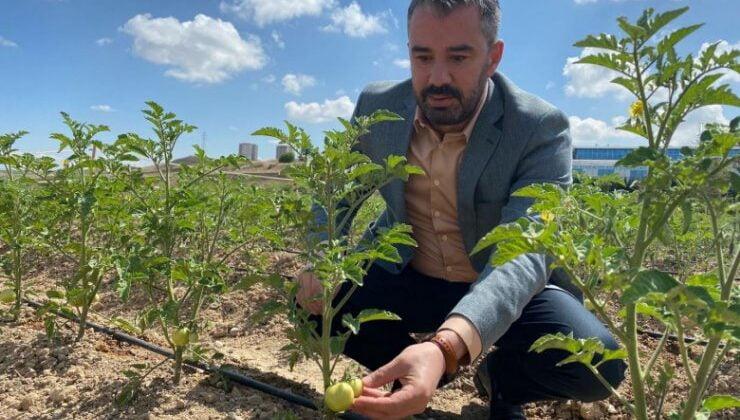 Pursaklar'da Ata Tohumları Filizleniyor