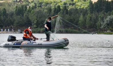 Başkentte balık türleri keşfediliyor