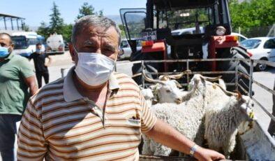 Büyükşehir'den yerli üreticilere teke desteği