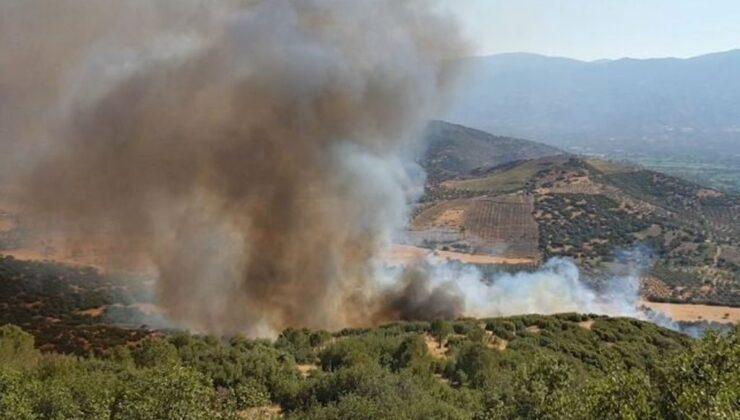 Aydın Nazilli'de arazi yangını ormana sıçradı