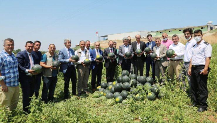 Bursa Karacabey'de karpuz hasadı