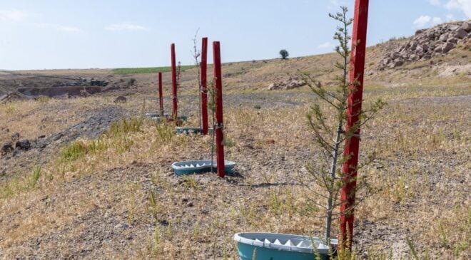 Kayseri Büyükşehir'den susuz bitki projesi