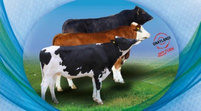 Büyükşehir'den bir destekte hayvan üreticilerine