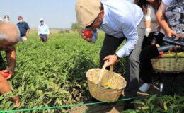 Ekrem İmamoğlu ilk hasadı çiftçilerle yaptı