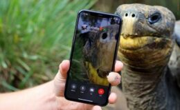 Nesli tükenen iki kaplumbağa Face Time'da buluştu