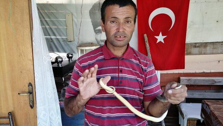 Akyurt'ta yakalanan yılan yeniden doğaya bırakıldı