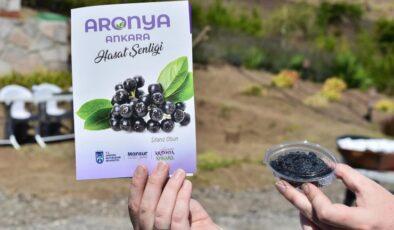 Büyükşehir'den aronia meyvesi için destek