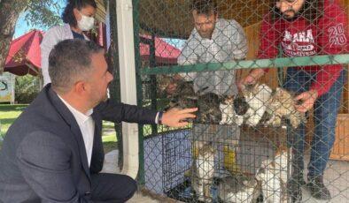 Pursaklar Belediyesi Sahipsiz Kedilere Sıcak Bir Yuva Arıyor