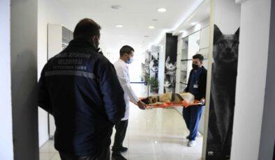 Büyükşehir Belediyesi sokak hayvanları için özel hastanelerle el ele