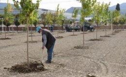 Manisa'da ağaçlandırma çalışması  yapıldı