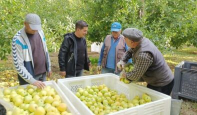 """CHP'li Halıcı: """"Yanlış tarım uygulamaları, üretimi olumsuz etkiledi"""""""